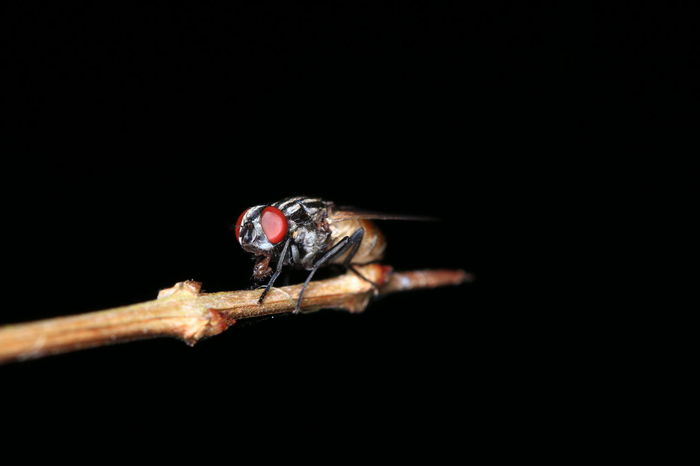 EyeEm Selects Close-up Insect One Animal Animals In The Wild Animal Wildlife Animal Themes Black Background Macro No People Red Nature Living Organism Outdoors Day