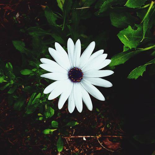 Secret Garden 🌷 Flowers 🌹 Plants And Flowers Flower Daisy💜 White Green Brown