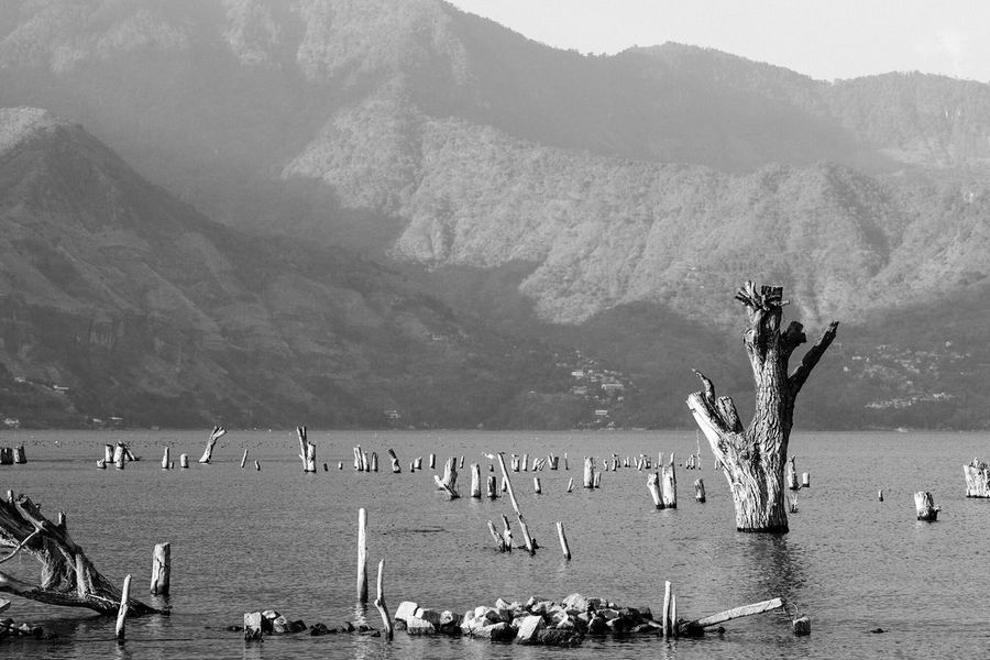 Tree stumps in the Lago de Atitlán, Guatemala. Mountain Mountain Range Nature Scenics Beauty In Nature Outdoors Water Tree Trunk Day Tree Stump Lake Lake View Landscape Black And White Monochrome Tranquil Scene Tranquility Travel Sea Lago Lago De Atitlan Guatemala Broken Broken Beauty Desolate