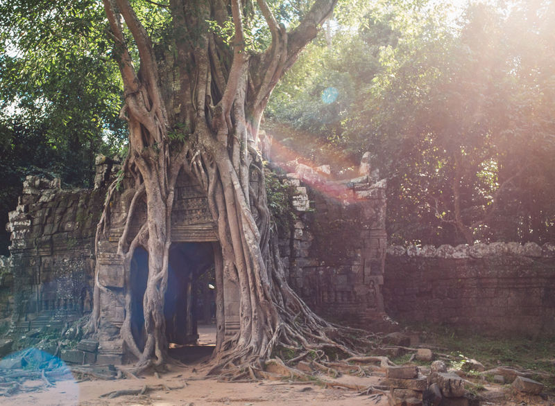 Siem Reap Cambodia Angkor Tree Plant Tree Trunk Trunk Nature Growth Day Land Sunlight Forest Outdoors Sunbeam Tranquility No People Branch Beauty In Nature Water Root Architecture Park