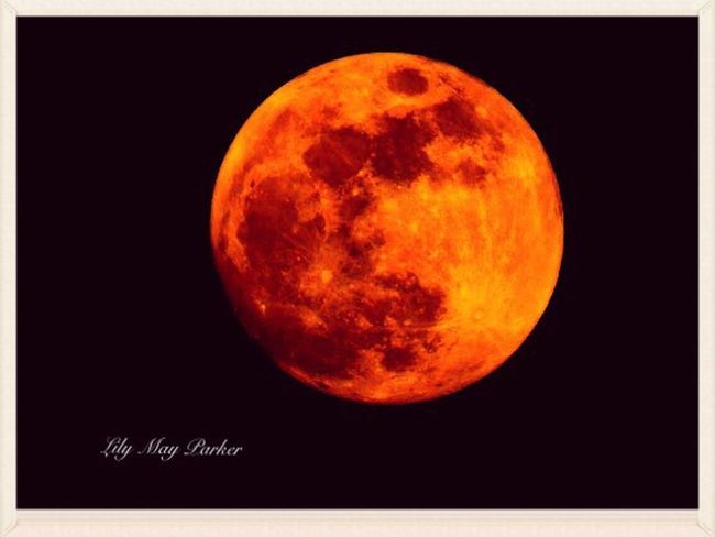 Check This Out Taking Photos Love Therapie❤️ Nature Beautiful Gallery EyeEm Gallery Lily Lily May Parker Belgium Taking Photos Loving You ❤ For Once From My Point Of View Steven Missing You Red Moon Full Moon 🌕