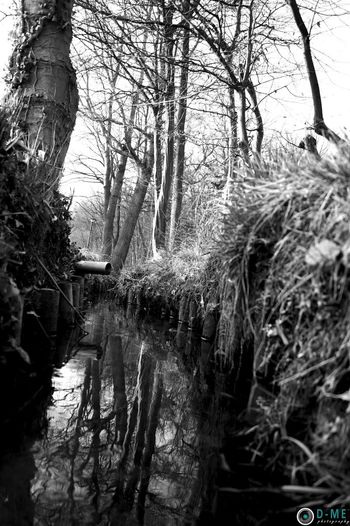 Nature Haspengouw Water_collection Trees Sky And Trees D-ME Photography Discover Your City Playground Black And White Water Reflections