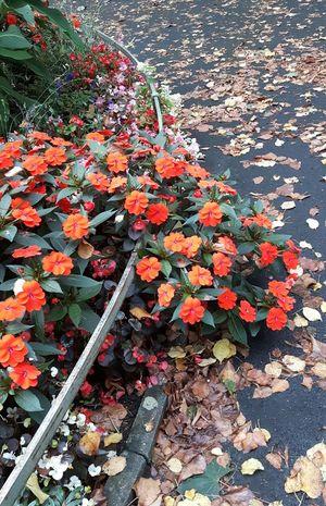 Es wird Herbst. Blätter fallen auf den Boden und es ist nass Herbst🍁