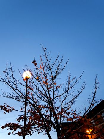 Autumn Campus Campus Life Chill Cranfield Evening Lonely Evening Peaceful Tranquility Moments When The Sun Goes Down