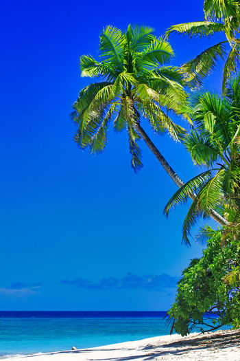 Tropical Island with a paradise beach and palm trees, Fiji Islands Beach Tropical Island Palms Fiji Day Daylight Daytime During Exterior Exteriors Island Islands Levu Lined Nobody Oceania Oceanica Outdoor Pacific Palm Palm-lined Photo Photos Sandy Shot Shots South Strand Strands The Tree Trees Traumstrand Fidschi Fidschi-Islands Fiji-Islands Holidays Vacation Relax Relaxing Dream Dream Beach Caribbean Caribic  Water Sky Sea Tropical Climate Beauty In Nature Palm Tree Plant Blue Scenics - Nature Tranquil Scene Tranquility Land Nature Growth Horizon Over Water Horizon No People Coconut Palm Tree Outdoors Tropical Tree Palm Leaf