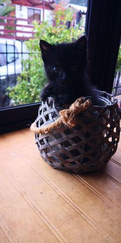 #cat #blackcat