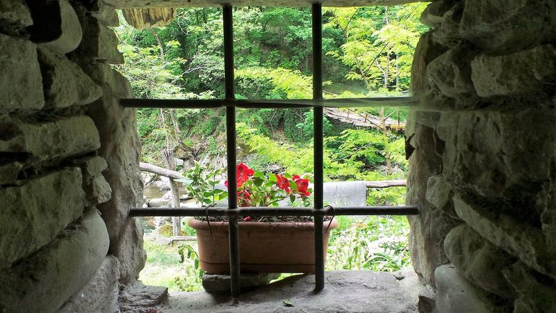 Beauty In Nature Flower Grass Green Green Color Growing Growth Plant Wall Rock Window Nature's Diversities On The Way