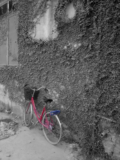 One kind of bikes Bycicle Colorsplash Contrast Red And Blue ASIA EyeEm Best Edits EyeEm Gallery On Your Bike Pattern Pieces Celebrate Your Ride Taking Photos From My Point Of View EyeEm Nature Lover Showing Why I Could Be An Open Editor