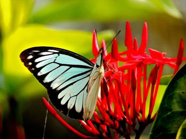 True shades of life. Animal Wing Red Close-up Freshness Flower Head Fragility One Animal Beauty In Nature EyeEmNewHere
