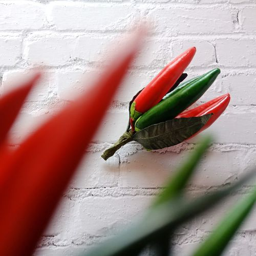 Close-up of red chili peppers on wall