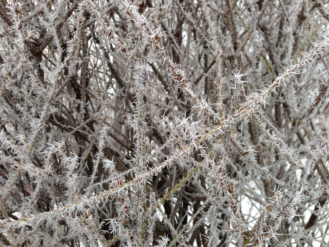 full frame, backgrounds, no people, close-up, winter, cold temperature, plant, snow, nature, day, beauty in nature, frozen, pattern, tranquility, outdoors, growth, white color, tree, textured, tangled