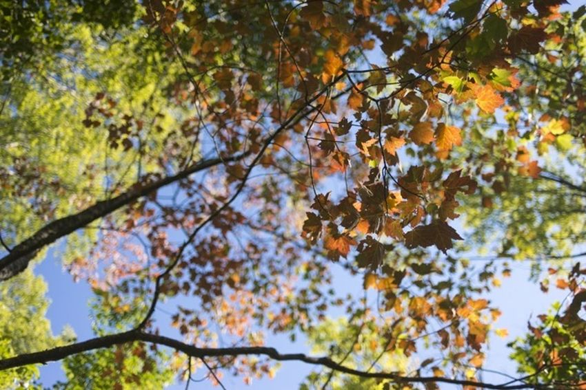 Look Up And Thrive first signs of fall colors :) Vacation Nature Autumn