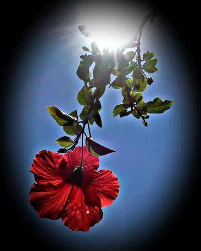 Brasil Brazil Brazilo Jardins Gardens Floroj Flores Flowers Red Nature Beauty In Nature Flower