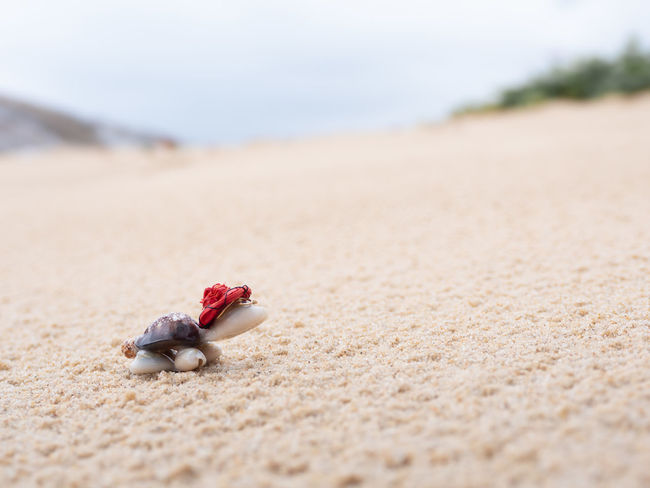 Toy tortoise climbing up sandy slope in beach Sand Beach Selective Focus Nature Animal Wildlife No People Animals In The Wild Outdoors Tortoise Turtle Toy Analogy Climbing Exert Struggle Slope Sands Sandy Red Hat