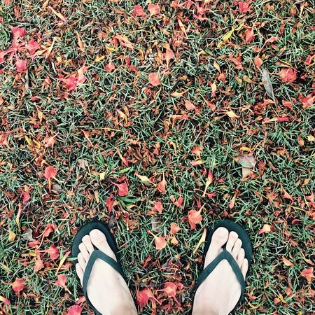 Nature_collection EyeEm Nature Lover Nature Green Vscocam Leaves Autumn leaves