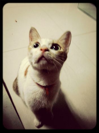Cat I Love Cats Meow meowmeow=^_^=