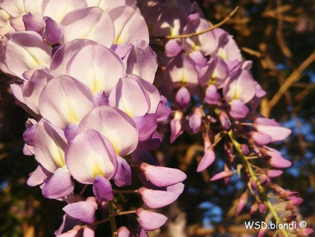 Purple Flowers Close Up Small Karoo Beauty Of Nature