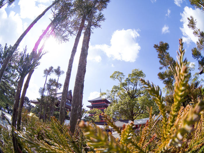 Tree Low Angle View Growth Nature Sky Plant Branch No People Beauty In Nature Sunlight Day Outdoors Flower Tranquility Leaf Palm Tree Scenics Cloud - Sky Treetop Close-up Japan Kumamoto