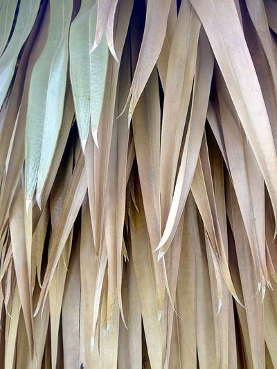 Leaf Leaves Palm Leaf Leaves Color Leaves Collection Leaf Pattern Leaf Photography Nature Abstract Pattern And Color Forms And Shapes Leaves And Colors Leaves Photography Pettern Of Leaves Pettern Leaf Collection Leaf Color Leaves Close Up