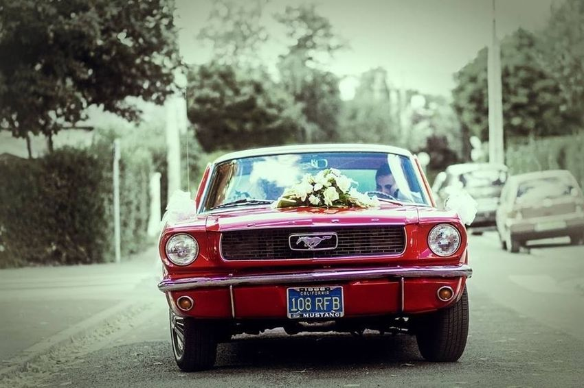 Mustang Hello World Photo Portrait Beautiful
