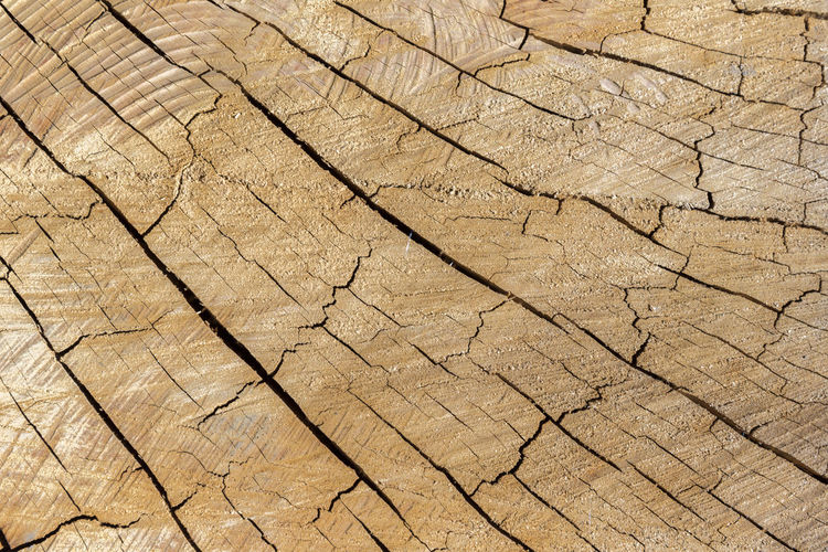 Arid Climate Backgrounds Brown Clay Close-up Cracked Day Desert Drought Full Frame Land Nature No People Outdoors Pattern Textured  Tree Ring Wood Grain