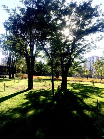 Love Photography Tree Shadow Grass Sunlight Tranquil Scene Growth Tranquility Tree Trunk Building Exterior Field Nature Travel Destinations Scenics Sunny Branch Green Color Outdoors Day Growing