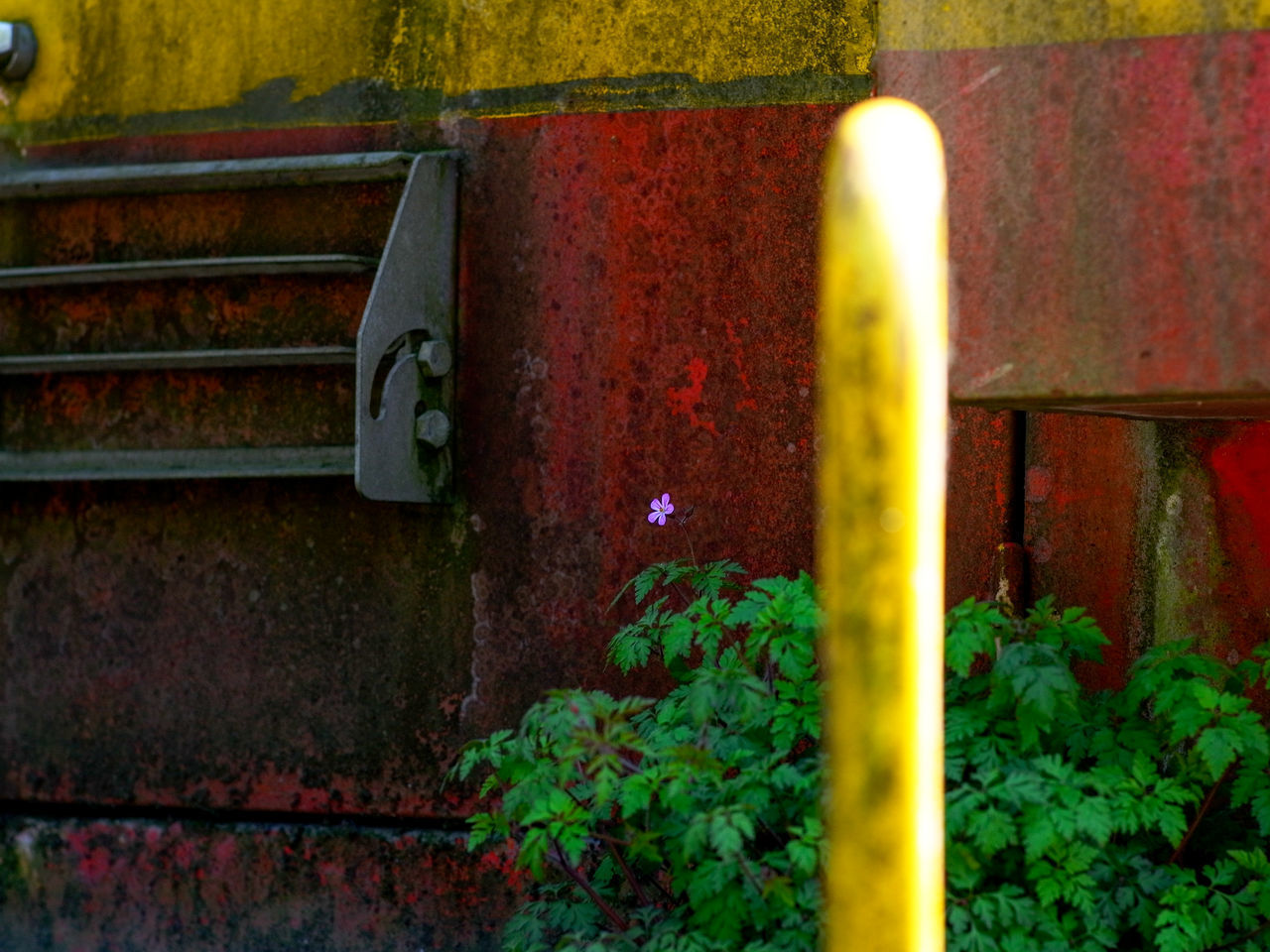 no people, plant, metal, close-up, day, growth, nature, outdoors, rusty, architecture, wall - building feature, leaf, yellow, built structure, plant part, selective focus, railing, green color, wall, pipe - tube