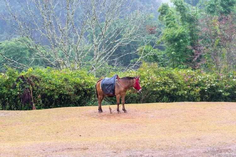 horse Animal