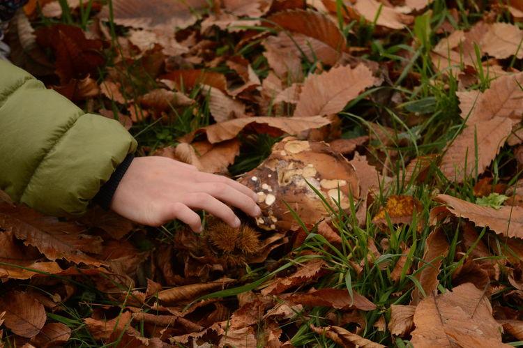 Autumn Leaves Cardo Forest Girl Grass Hand Perfect Match Mushroom Showcase: November