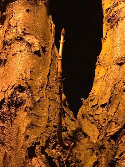 Magical Wand Harry Potter Wand Natural Wand Tree's Willy Sehrdor Cho'p Волщебная Палочка Outdoors No People San'ati Laziz Искусство от Лазиза Art By Laziz London Photography