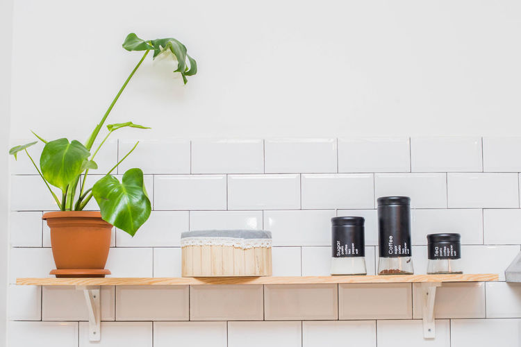 Potted plant against white wall at home
