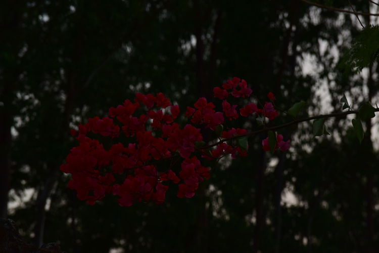 Flowers Flower Red Growth Fragility Nature Beauty In Nature Freshness No People Close-up Outdoors Tree Day