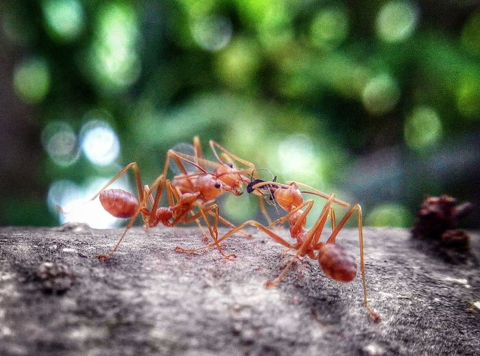 Eyeem Philippines Ants Feasting Sharing Is Caring Macro Nature
