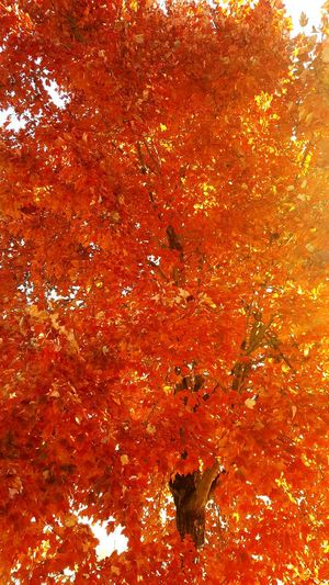 Orange splashes against the sky! Fall at its best! Yellowish, redish,brownish, orangest Orange Color Abstract Backgrounds Full Frame No People Multi Colored Textured  Close-up Day Outdoors Holi Art Is Everywhere