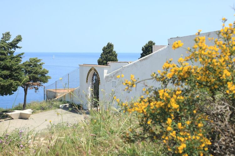 A little cemetery looking over the ocean. This is where he sleeps now :) Simple Quiet Love Portbou Sky Cemetery Flower Old Lens Mir1b No Edit/no Filter Flowering Plant Sea Beauty In Nature Yellow Clear Sky