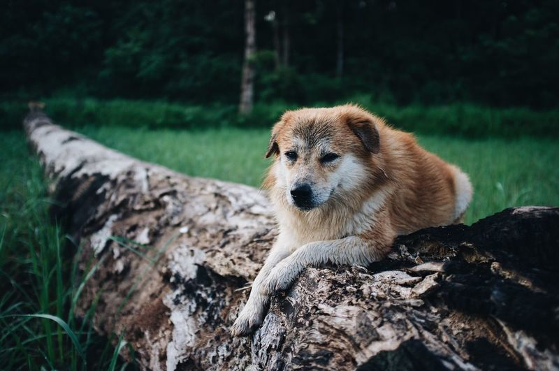 Dog looking away on rock in forest