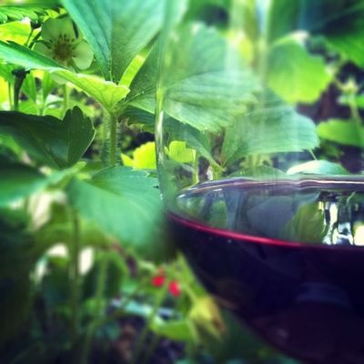Rouge fraisier. Bordeaux Wine Instawine Winestagram Redwine Winolife Wino Terrasse Apéro Vivredehors