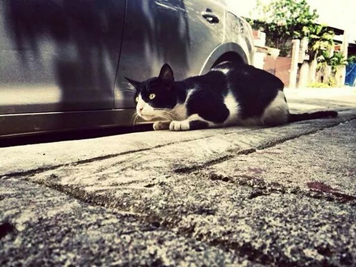 TARGET LOCK-IN. Cat Watching I Love My Cat