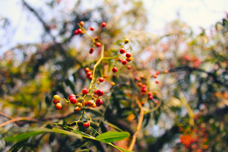 EyeEmNewHere Interesting Nature Nature Photography Beauty In Nature Branch Canonphotography Close-up Creative Day Focus On Foreground Food Food And Drink Freshness Fruit Growth Nature Nature_collection No People Outdoors Plant Red Rose Hip Rowanberry Tree