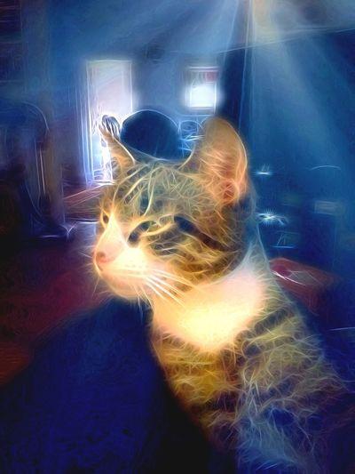 Cat Catsofinstagram TangledFX