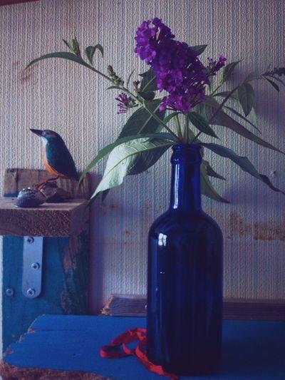 Buddleja. Summer Flowers My Room Driftwood Vacocam EyeEm Nature Lover