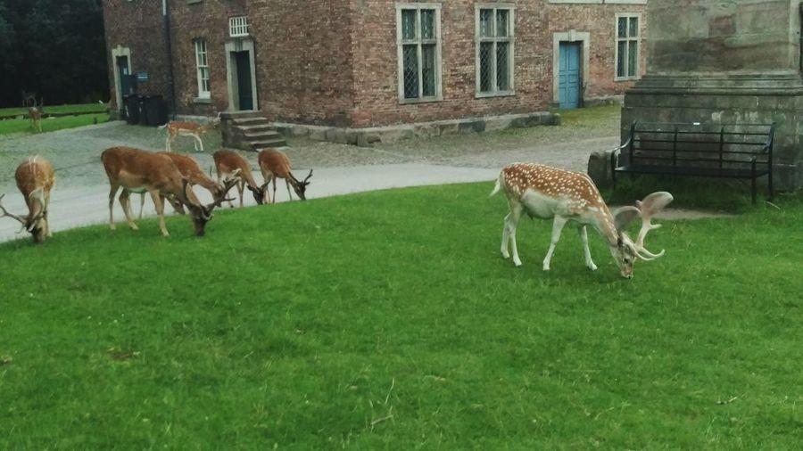 Some nice deer First Eyeem Photo