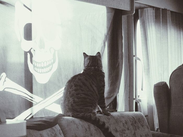 Hanging Out Check This Out Taking Photos Enjoying Life Relaxing Pet Tabby Cat Rv Crossbones Skull And Crossbones Window Looking Out The Window Inside Window Peeping Animal Photography Feline Animal Thoughts EyeEm Animal Lover Animal Portrait