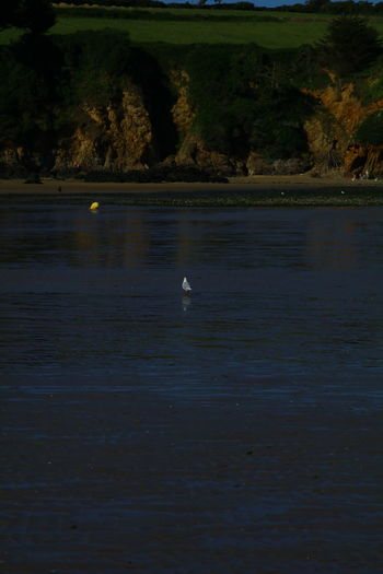 Tranquility Water Reflections Beach Bird Fall Sea Seascape Water Reflection