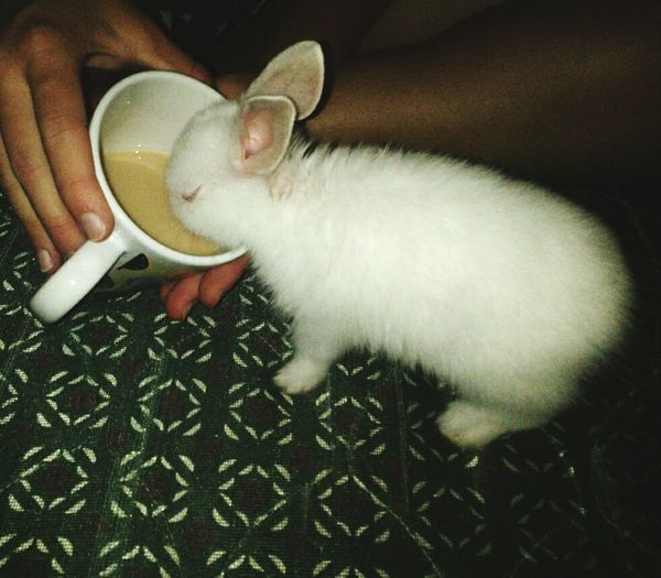 Rabbit love Rabbit Drinking Coffee Adorable Fluff Of Rabbit