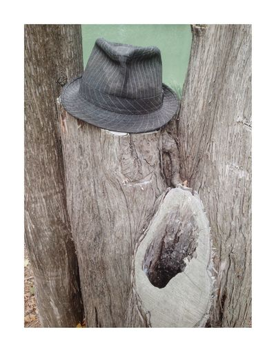 Laurel &… Tree Trunk Wood - Material No People Close-up Tree White Background Day Outdoors Nature Hat