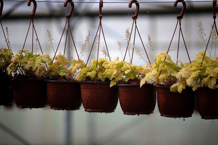 Potted plants hanging at market stall