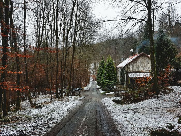 house in the forest. Forest Cottage Trees Road Into The Woods Loneliness Winter Snow Nature