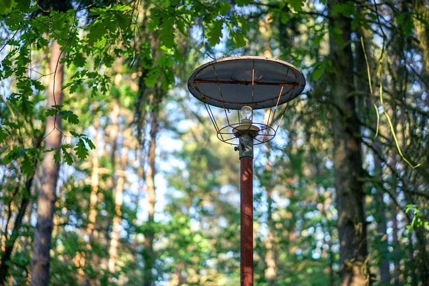 Narnia in Brandenburg Oak Tree Spring Lamp Post Tree Plant Nature Low Angle View Lighting Equipment Green Color Focus On Foreground Day No People Street Light Outdoors Growth Sunlight Forest