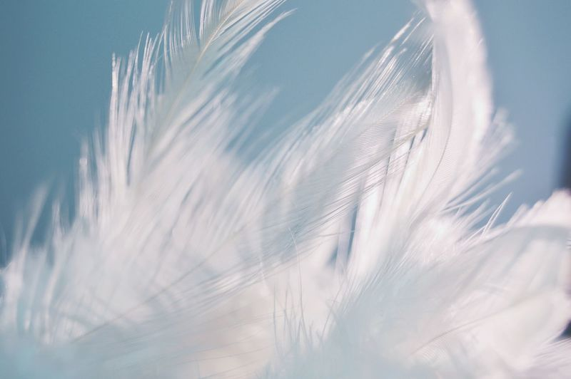 "Macro Beauty ""cold feathers"" Winter Dreamcatcher Feathers Cold Days Beauty"